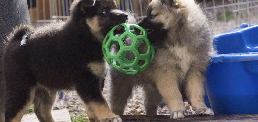 ALV + workshop 'Elke pup een goede start'